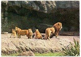 Leeuw Lion Löwe Dierenpark Carl Hagenbeck Tierpark Hamburg - Dauphins