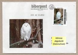Privatpost - Biberpost - Schnee-Eule (Bubo Scandiacus) Auf Gelaufenen Umschlag - Eulenvögel
