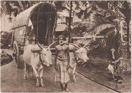 Asie :  ILE  De Ceylan : Hopital De Welisara-Ragama , Chariot Boeuf Et Son Conducteur - Postcards