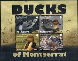 Bloc Sheet Oiseaux Canards Birds Ducks Neuf  MNH **  Montserrat 2012 - Canards