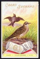 CHROMO Chocolat SUCHARD   +/- 1897  Serie 56     Oiseaux Chanteurs  Alouette   Lerche    Trade Card  Singing Birds  Lark - Suchard