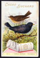 CHROMO Chocolat SUCHARD   +/- 1897  Serie 56  Oiseaux Chanteurs Merle Schwarzdrossel Trade Card Singing Birds Blackbird - Suchard