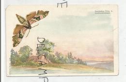 Smerinthus Tiliae L. Ferme Dans La Campagne. - Papillons