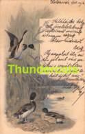 CPA  ILLUSTRATEUR ARTIST SIGNED SCHMITZBERG CANARD DUCK THEO STROEFER KOLOZSVAR ( PLI - CREASE ) - Oiseaux