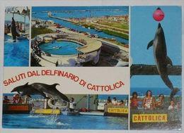 RIMINI - Saluti Dal Delfinario Di Cattolica - Aquarium - Delfino / Dolphin Show - 1988 - Rimini