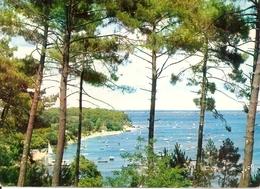 33. CPM. Gironde. Arcachon. Bassin D'Arcachon. La Pointe Aux Chevaux - Arcachon