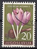 Jugoslavia 1957 Sc. 471 Fiori Flowers Colchicum Autumnale Pianta Medicinale Velenosa  Used - Piante Medicinali