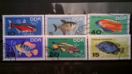 FRANCOBOLLI STAMPS GERMANIA DEUTSCHE DDR 1966 USED SERIE COMPLETA ACQUARIUM  FISH GERMANY - [6] Repubblica Democratica