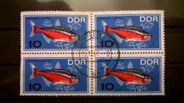 FRANCOBOLLI STAMPS GERMANIA DEUTSCHE DDR 1966 USED QUARTINA AQUARIUM FISH ANNULLO ERFURT GERMANY - [6] Repubblica Democratica