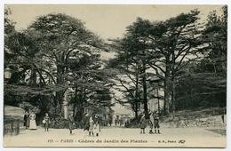 75 : PARIS - CEDRES DU JARDIN DES PLANTES - Parcs, Jardins