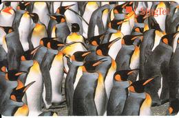 SINGAPORE(GPT) - Pinguins, CN : 241SIGB2K, Used - Pingouins & Manchots