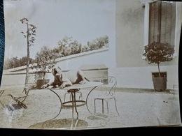 PHOTO ORIGINALE _ VINTAGE SNAPSHOT : CHIEN à FLEURIEU Sur SAONE Près De LYON _ CIRCA 1890 - Photos