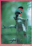 Postal Stationery - Bird - Bullfinch - Red Cross 1994 - Suomi Finland - Postage Paid - Finlandia - RARE - Finlande