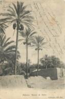 ALGERIE - PALMIERS - REGIME DE DATTES - Collections ND Phot. - 3 - Algerien