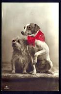CP 5- 2 PETITS CHIENS  AVEC YEUX EN VERRE ET NŒUD DE SOIE ROUGE VRAIE-  CP-PHOTO DES ANNÉES 1920-30- GROS PLAN- - Chiens