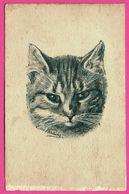 Portrait De Chat Par ??? - Dessin - B.D. Co Série 2622 - Chats