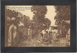 CPA Comores Type Non Circulé Métier Mayotte Récolte De Vanille - Comores