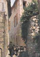 CPM*34* ST-GUILHEM Le DÉSERT _ Chevrier Et Son Troupeau _ SUP *2 SCANS - Autres Communes