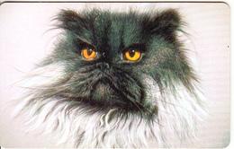 RUSSIA-KRASNODAR(chip) - Cat(100 Units-large), Tirage 5000, Used - Cats