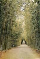 30 Domaine De Prafrance Par Anduze Allée De Bambous (2 Scans) - Anduze