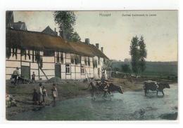 Houyet  Vaches Traversant La Lesse 1906 - Houyet