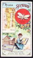 CHROMO Chocolat SUCHARD  L'apiculture  Les Abeilles  Bees  Serie 243 - Suchard