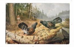 """Poule    Illustrateur  W; V; Wright       -  """"  Coqs   Des  Bois  Combattants  """"   """"  Taistelevia   Metsoja  """" - Oiseaux"""