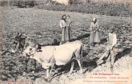 En Cerdagne Tres Animee Scene De Labour Attelage Vache Ane Charrue Metier Agriculteur Paysan Farmer Bauer - France