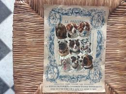 DECOUPIS LA PRECIEUSE Chicorée Extra LE MOKA JAPONAIS B.Bourgeois PROVILLE-LES-CAMBRAI  Nord  CHIENS - Animals