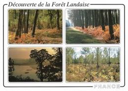 40 Découverte De La Forêt Landaise (2 Scans) - Non Classés