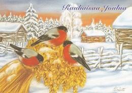 Birds - Bullfinches On Oatmil In Winter Landscape - Elina Kautto - Noël