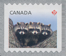 Canada (Scott No.2506a - Courant / Raton Laveur / Racoon / Definitives 2012) [**] (P) FROM 5000 ROLL - 1952-.... Règne D'Elizabeth II