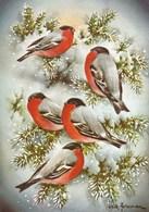 Birds On The Tree Branches - Bullfinches In Winter - Erik Forsman - Noël