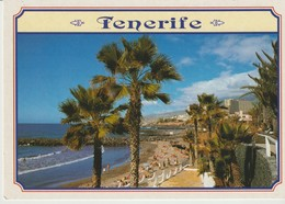 C.P. - PHOTO - TENERIFE - PLAYA DE LAS AMERICAS - PETER BAKER - 601 - Tenerife