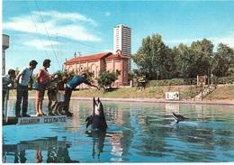 ACQUARIUM DEI DELFINI - Delfini