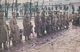 AK Sanitätshunden - Weltkrieg 1914-18