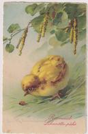 C.Klein.Chicken In Easter Time.HWB Edition Nr.2201? - Klein, Catharina