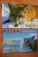 4 PCs Lot - Fuchs (Raubtier), Renard  - Fox  - Old QSL Postcard - - Animals