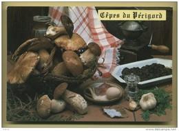 24 Cepes Du Perigord ( Recette Champignons, Panier En Osier, Moulin A Café Peugeot ) - Champignons