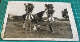 Real B&W Photo Postcard Printed By Jerome Ltd, Of Two Men With Horse - Horses