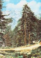 Corse        H574        Forêt De VIZZAVONA Et La Haîne Du Monte D'oro - Frankreich