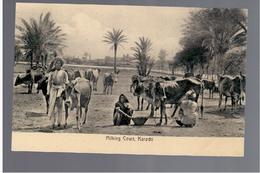 PAKISTAN Karachi Milking Cows Ca 1920 OLD POSTCARD - Pakistan