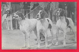 CANE - CHIEN - DOG - HUND - Hunde