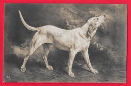 CANE - CHIEN - DOG - HUND - Cani