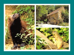 24 Calviac Reserve Zoologique Glouton - Animaux & Faune