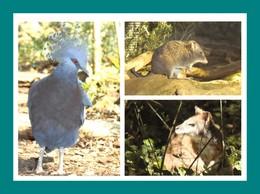 24 Calviac Reserve Zoologique Goura Victoria, Potorou à Long Nez, Wallaby De Parma - Animaux & Faune