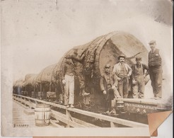 ILWACO RAILWAY SITKA SPRUCE WASHINGTON  Dendrology, Forest, Xylology, Forestry  Fonds Victor FORBIN (1864-1947) - Trenes