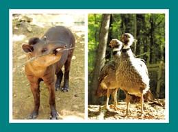 24 Calviac Reserve Zoologique Tapir - Animaux & Faune