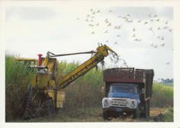 CUBA - Entier Postal - Récolte De Canne à Sucre - Cuba