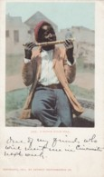 Black Americana, 'Native Sugar Mill' Black Boy Eats Sugar Cane, C1900s Vintage Detroit Photographic Co. #5755 Postcard - Black Americana